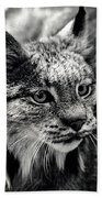 North American Lynx In The Wild. Hand Towel