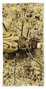 Northern Beach Tiger Beetle Marthas Bath Towel