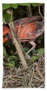 Northern Cardinal At Nest Bath Towel