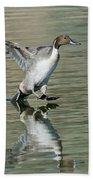Northern Pintail Drake Tail Touching Bath Towel