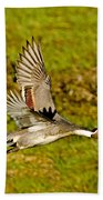Northern Pintail In Flight Bath Towel
