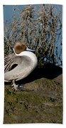 Northern Pintail Pair At Rest Bath Towel