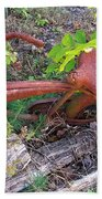 Old Rusty Bike In The Weeds 2 Bath Towel