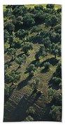 Olive Farmland In Spain Bath Towel