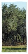 Olive Trees Of Provence Bath Towel