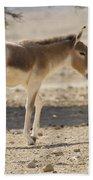 Onager Equus Hemionus Bath Towel
