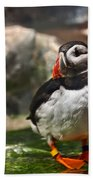 One Puffin Bird Art Prints Bath Towel