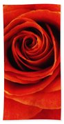 Orange Apricot Rose Macro With Oil Painting Effect Bath Towel
