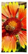 Orange Fiery Gaillardia Flower And Bee Macro Bath Towel