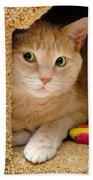Orange Tabby Cat In Cat Condo Bath Towel