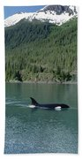 Orca Female Inside Passage Alaska Bath Towel