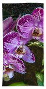 Orchid Flowers Growing Through Old Wooden Picture Frame Bath Towel
