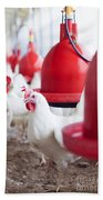 Organic Chicken Coop  Bath Towel