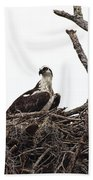 Osprey On A Nest In The Everglades Bath Towel