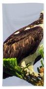 Osprey Bath Towel