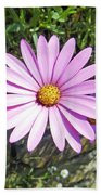 Osteospermum - African Daisy - Pink Bath Towel