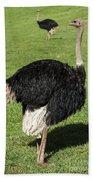 Ostrich 1 Bath Towel
