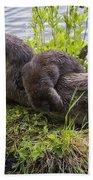 Otter Family Fun Bath Sheet