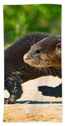 Otters Crossing The Road  Bath Towel