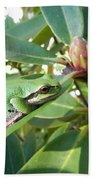 Pacific Chorus Frog On A Rhodo  Bath Towel