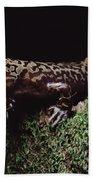 Pacific Giant Salamander On Mossy Rock Bath Towel