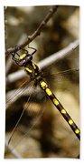 Pacific Spiketail Dragonfly On Mt Tamalpais Bath Towel