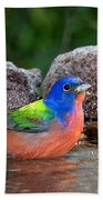 Painted Bunting Passerina Ciris In Water Bath Towel