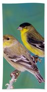 Pair Of Lesser Goldfinches Bath Towel