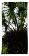 Palm Tree In Curacao Bath Towel