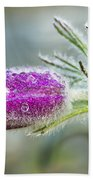 Pasque Flower Bath Towel