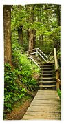 Path In Temperate Rainforest Hand Towel