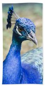 Pavo Cristatus II Indian Blue Peacock Bath Towel
