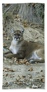 Bobcat Bath Towel by Mae Wertz