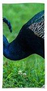 Peacock Portrait 5 Bath Towel