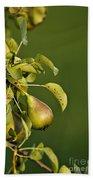Pear Tree Bath Towel
