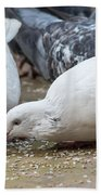 Pecking Pigeons Bath Towel