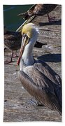 Pelican On Dock Bath Towel