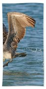 Pelican Taking Off Bath Towel