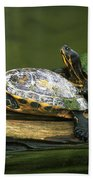 Peninsula Cooter Turtles Bath Towel