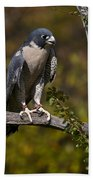 Peregrine Falcon Bath Towel