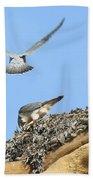 Peregrine Falcons - 2 Bath Towel