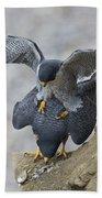 Peregrine Falcons Mating Bath Towel
