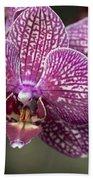 Phalaenopsis Helen Alice Mary 2220 Bath Towel