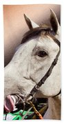 Phantom Lover Race Horse Looking On Bath Towel