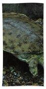 Pig-nosed Turtle Bath Towel