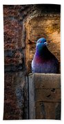 Pigeon Of The City Bath Towel