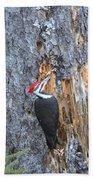 Pileated Woodpecker  Bath Towel