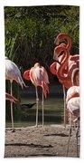 Pink Falmingos At The San Diego Zoo Bath Towel