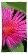 Pink Flower Of Succulent Carpet Weed  Bath Towel