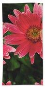 Pink Gerbera Daisy Hand Towel